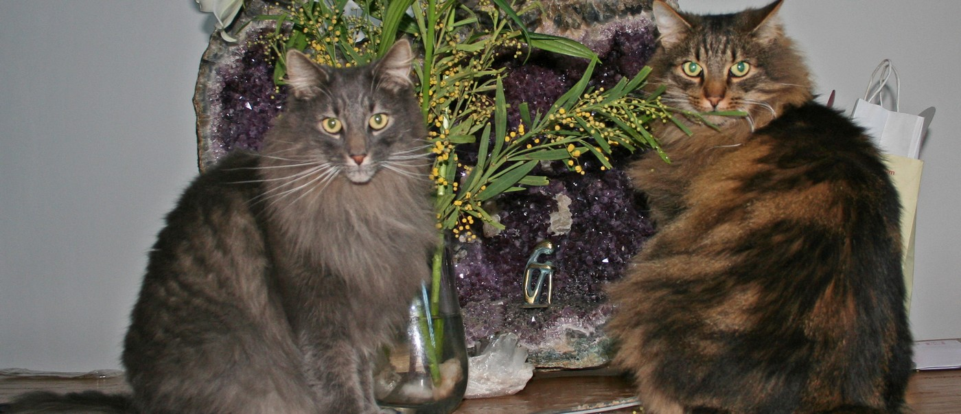 Westrikatt cats